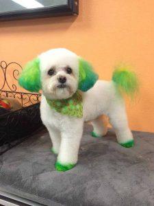 nhuộm lông chó meo 1