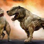 Tìm hiểu về chó Pitbull Fight – mua bán chó Pitbull Fight