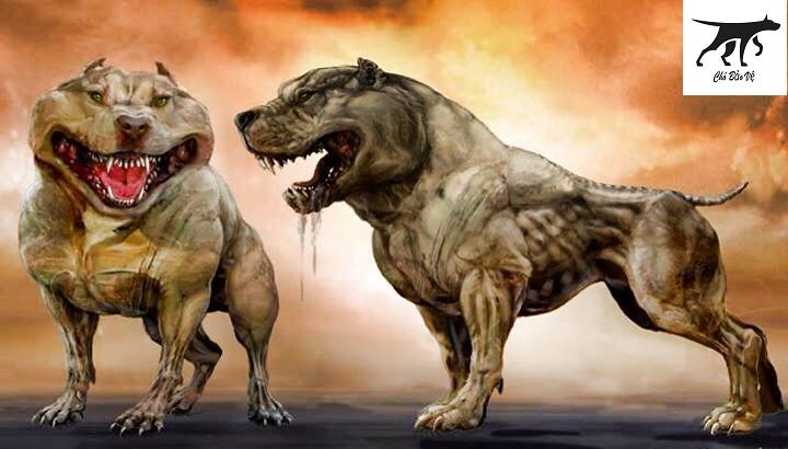 tìm hiểu về dòng chó pitbull fighting