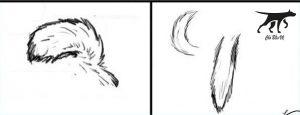 đuôi chó Husky được coi là thuần chủng