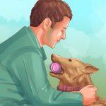 Cách chăm sóc chó Mailinois Bỉ