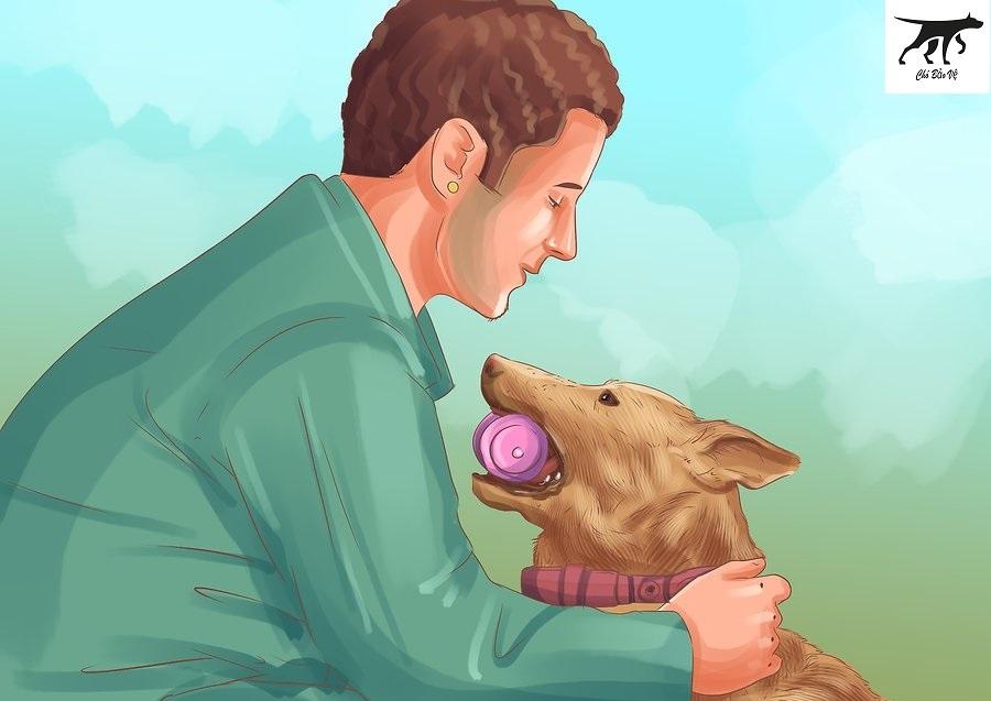 chăm sóc chó malinois