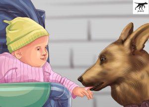 chó malinois và trẻ nhỏ