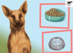 thức ăn cho chó malinois