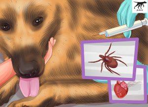 tiêm phòng sổ giun cho chó malinois