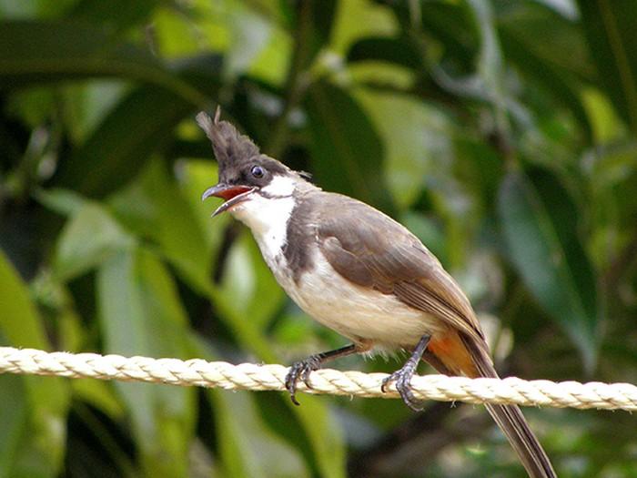 tập luyện cho chim bổi
